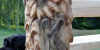 drevorezba-lavicka-masiv-vyrezavana-klubsenioru-radekzdrazil-012