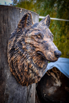 drevorezba-carving-wood-drevo-busta-vlk-hlava-vyrezavani-rezbar-radekzdrazil-20201102-02