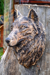drevorezba-carving-wood-drevo-busta-vlk-hlava-vyrezavani-rezbar-radekzdrazil-20201102-09