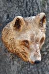 vlk-drevorezba-plastika-vyrezavani-carwing-woodcarving-trofej-hlava-radekzdrazil-20190331-011