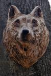 vlk-drevorezba-plastika-vyrezavani-carwing-woodcarving-trofej-hlava-radekzdrazil-20190331-012