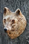 vlk-drevorezba-plastika-vyrezavani-carwing-woodcarving-trofej-hlava-radekzdrazil-20190331-03
