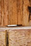drevorezba-vyrezavani-carving-wood-drevo-socha-vceli-klat-radekzdrazil-20201109-08