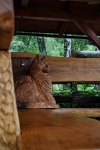drevorezba-vyrezavani-carving-wood-drevo-socha-rohova_lavicka-kocour-radekzdrazil-20210730-05