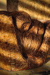 drevorezba-vyrezavani-rezani-carving-wood-drevo-sovy-rdekzdrazil-20200402-06