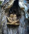 drevorezba-carving-wood-drevo-sovy-obora-hukvaldy-radekzdrazil-01