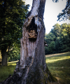 drevorezba-carving-wood-drevo-sovy-obora-hukvaldy-radekzdrazil-02