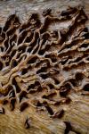 drevorezba-vyrezavani-rezani-carving-wood-drevo-obraz-strom-treeoflife-rdekzdrazil-05