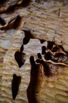 drevorezba-vyrezavani-rezani-carving-wood-drevo-obraz-strom-treeoflife-rdekzdrazil-08