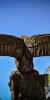 drevorezba-totem-vyrezavani-carving-wood-drevo-socha-radekzdrazil-20200522-011