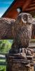 drevorezba-totem-vyrezavani-carving-wood-drevo-socha-radekzdrazil-20200522-04