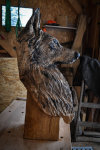 rezbar-drevorezba-vyrezavani-carving-wood-drevo-socha-busta-vlcak-70cm-radekzdrazil-20210205-09