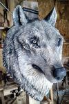 drevorezba-vyrezavani-carving-wood-drevo-socha-vlk-radekzdrazil-20210423-02