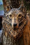 drevorezba-carving-wood-drevo-busta-vlk-hlava-vyrezavani-rezbar-radekzdrazil-01