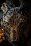 drevorezba-carving-wood-drevo-busta-vlk-hlava-vyrezavani-rezbar-radekzdrazil-011