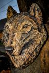 drevorezba-carving-wood-drevo-busta-vlk-hlava-vyrezavani-rezbar-radekzdrazil-013
